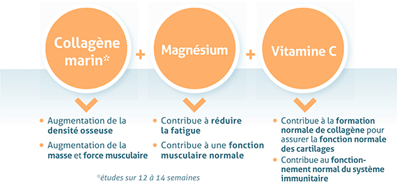 collagene-sport-3-ingredients-bioactifs.