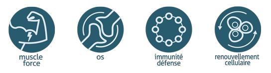 boisson protéinée pour les muscles, les os, la défense de l'immunité, le renouvellement cellulaire